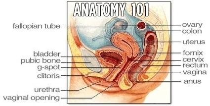 Understand you. Female g spot diagram